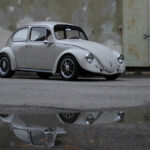 California Look Beetle 1967